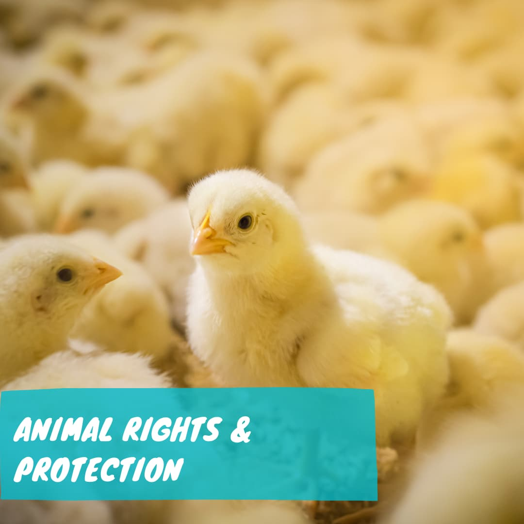 Animal Rights and Protection